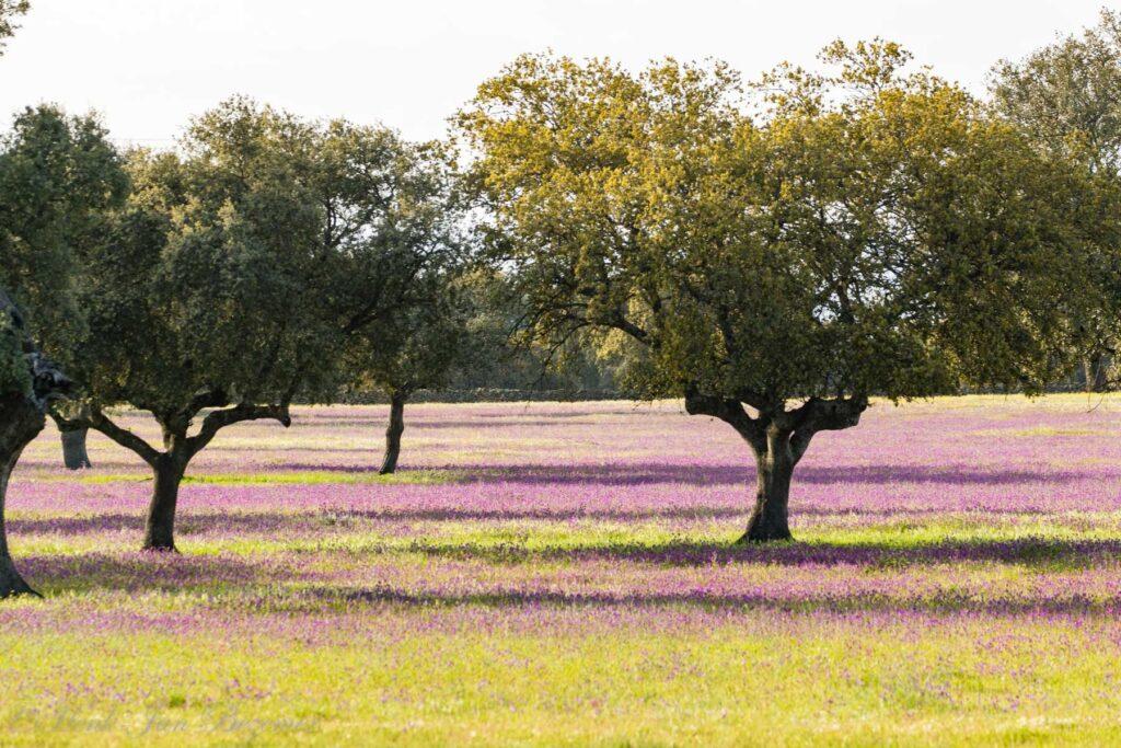 vlakte van Hinojal